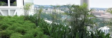 Сад на крыше. Виды озеленения