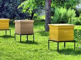 Выбираем домики для пчел!